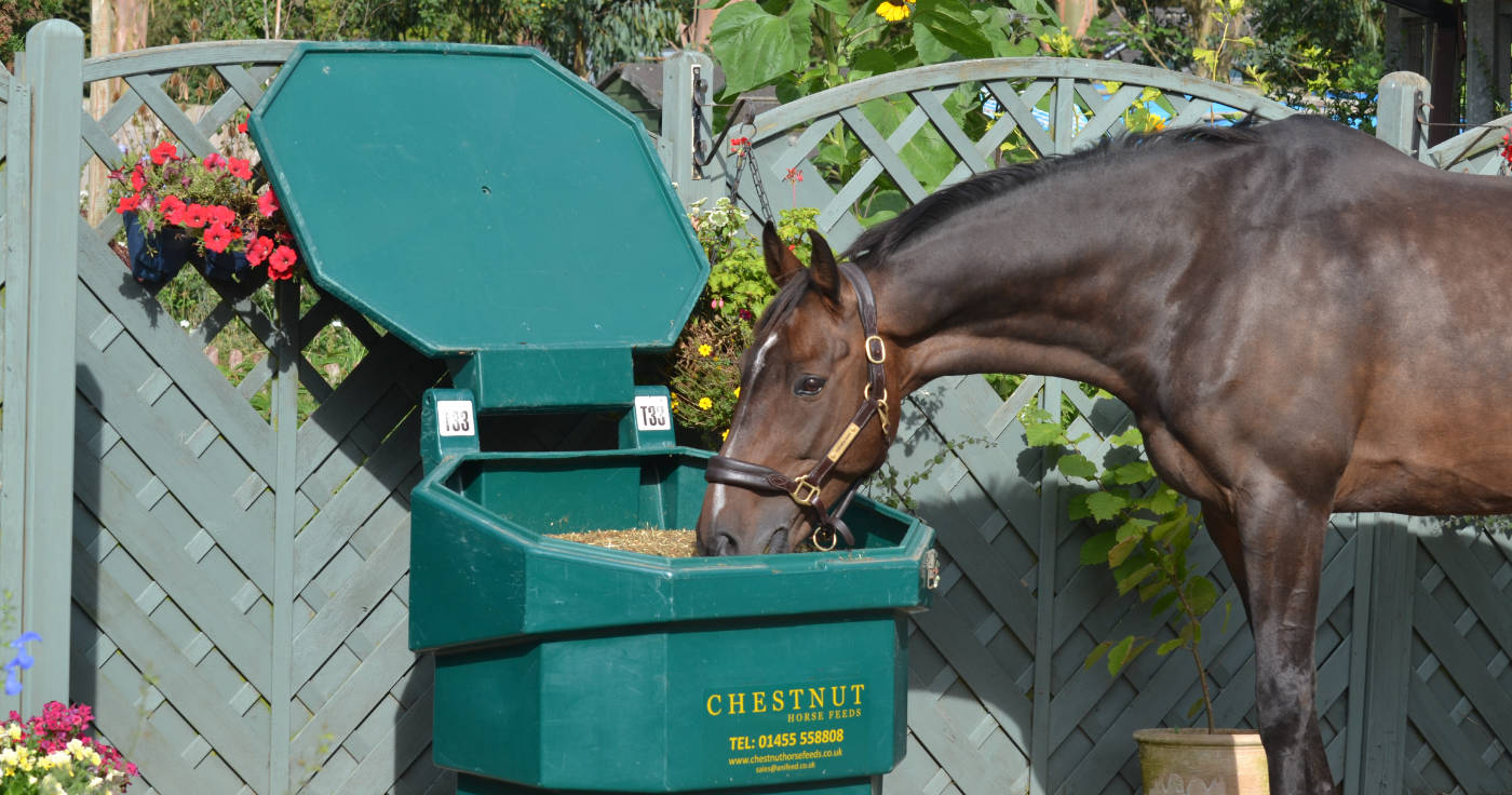 25% Off Your First Chestnut Bulk Bin. Subject to Terms and Conditions.