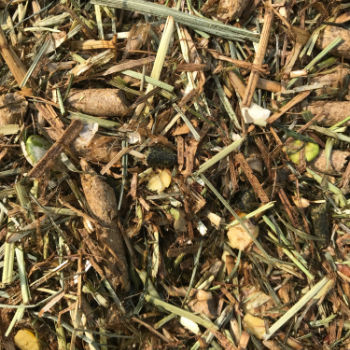 a picture of Chestnut Daily Maintenance horse feed